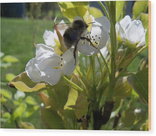 The Pollenator Wood Print