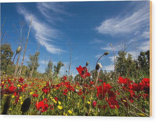 The Poppies Field Wood Print