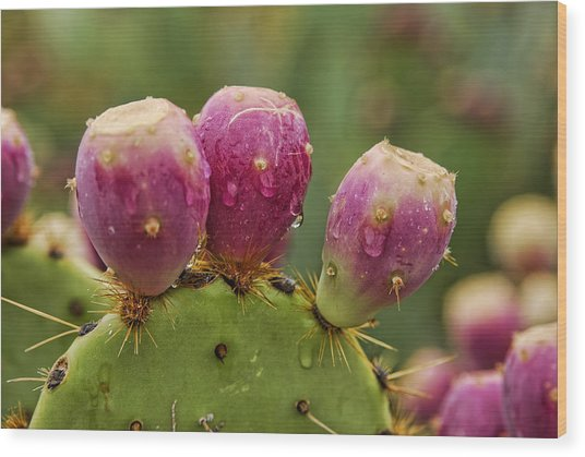 The Prickly Pear  Wood Print