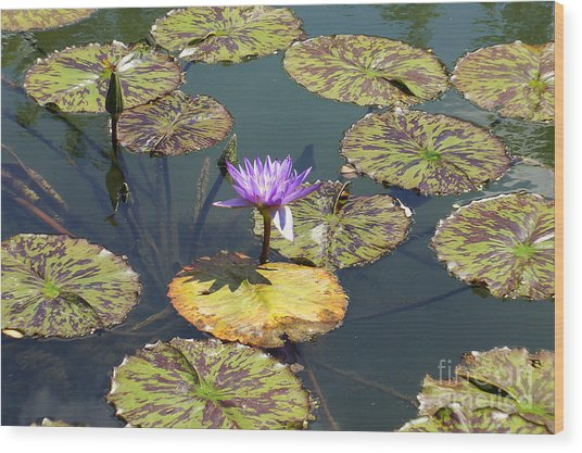 The Purple Water Lily With Lily Pads - Two Wood Print