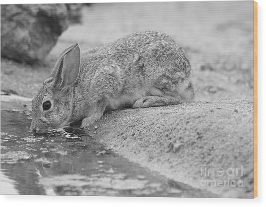 The Rabbit And The Water Wood Print