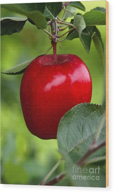 The Red Apple Wood Print