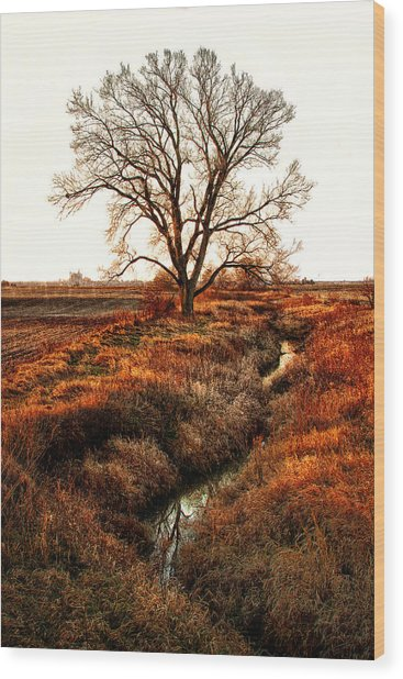 The Red Morning Tree Wood Print