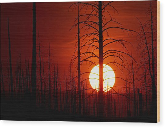 The Red Planet Wood Print