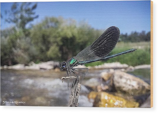 Wood Print featuring the photograph The River Dragonfly by Stwayne Keubrick