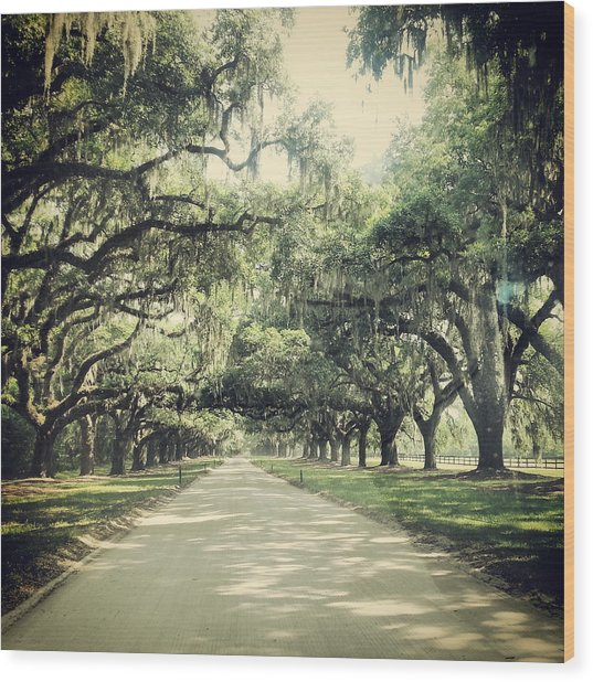 The Road From Boone Hall Wood Print