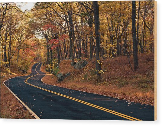 The Road Into Autumn Wood Print by Zev Steinhardt