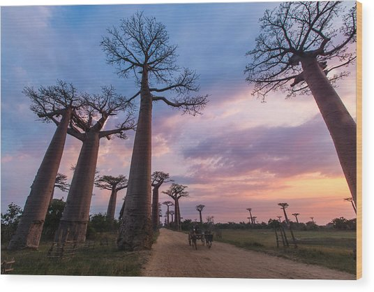 The Road To Morondava Wood Print