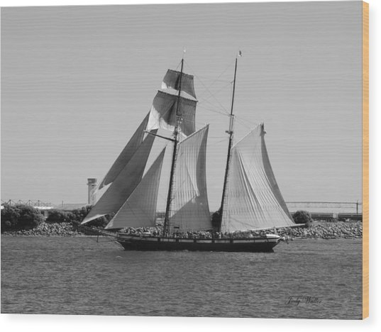 The Sails Wood Print by Judy  Waller