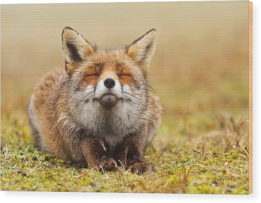 The Smiling Fox Wood Print