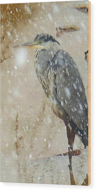 The Snow Bird Wood Print
