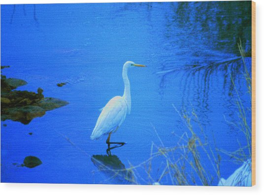 The Snowy White Egret Wood Print