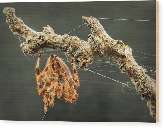 The Spectacular Spider II Wood Print
