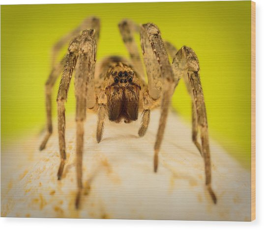 The Spider Series V Wood Print
