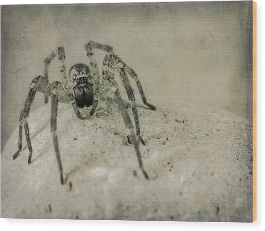 The Spider Series Xi Wood Print