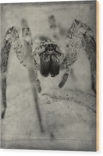 The Spider Series Xii Wood Print