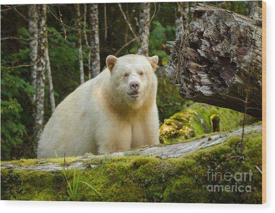 The Spirit Bear Wood Print by Melody Watson