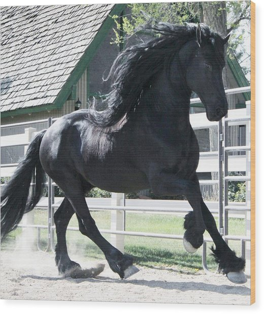 The Spirit Of The Friesian Wood Print