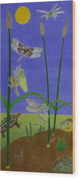The Story Of The Dragonfly With Description Wood Print