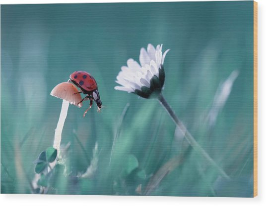 The Story Of The Lady Bug That Tries To Convice The Mushroom To Have A Date With The Beautiful Daisy Wood Print by Fabien Bravin