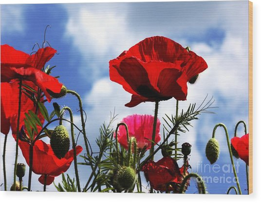 The Summer Poppy Wood Print