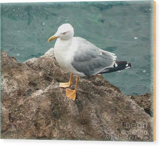 The Thinker - Seagull Photography By Giada Rossi Wood Print