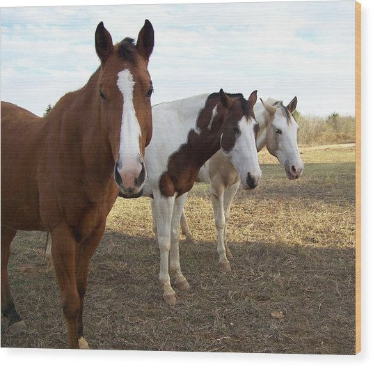 The Three Amigos Wood Print by Cherie Haines