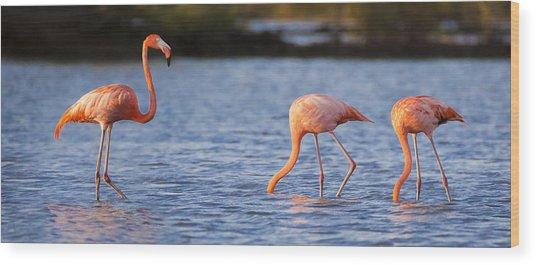 The Three Flamingos Wood Print