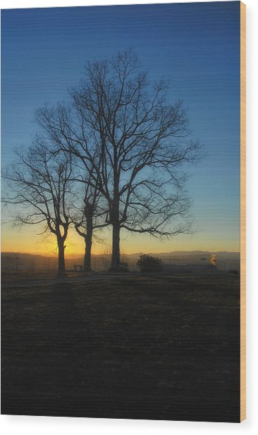 The Three Oaks Wood Print