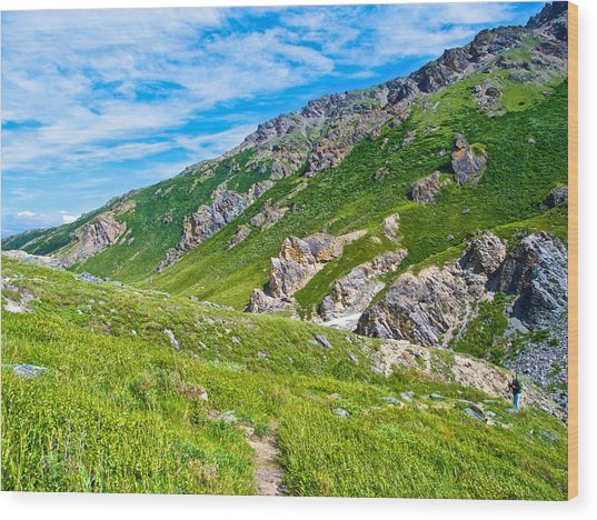 The Trail Beyond In Denali Np-ak Wood Print