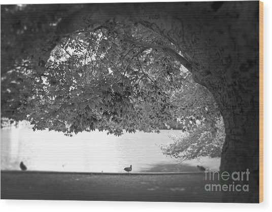 The Tree At Mill Pond Wood Print