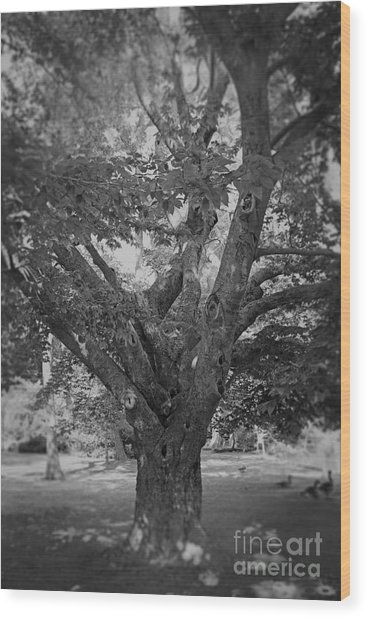 The Tree By The Lake Wood Print