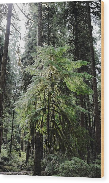 The Tree In The Forest Wood Print