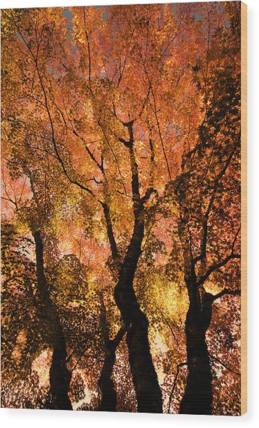 The Trees Dance As The Sun Smiles Wood Print