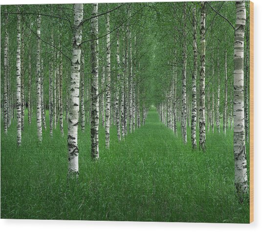 The Tunnel Wood Print by Christian Lindsten