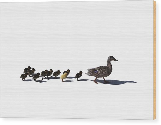The Ugly Duckling  Wood Print