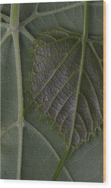 Wood Print featuring the photograph The Underside Of Frost Grape Leaves by Daniel Reed