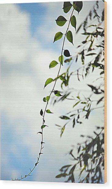 The Vine Wood Print by Stephanie Grooms