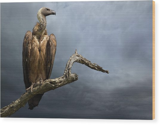 The Vulture Wood Print