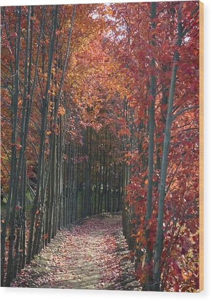 The Wall Of Trees Wood Print