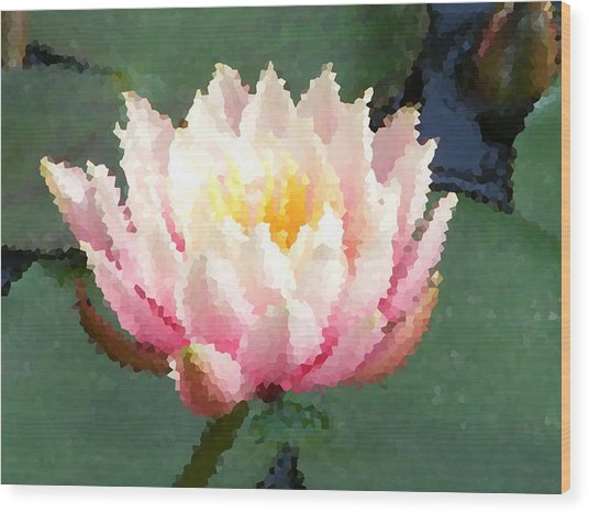 The Water Lily Wood Print