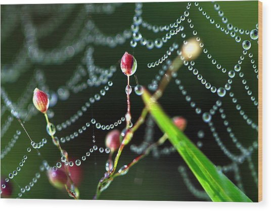 The Web And The Pods Wood Print by Carolyn Fletcher
