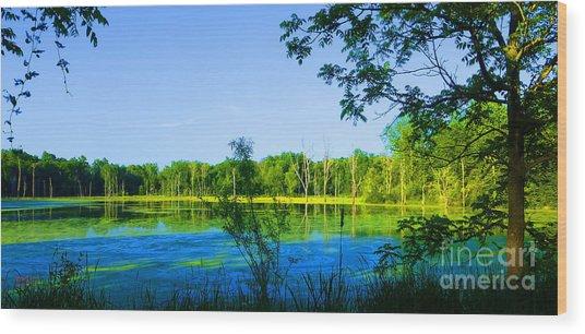 The Wetlands At Potato Creek Wood Print