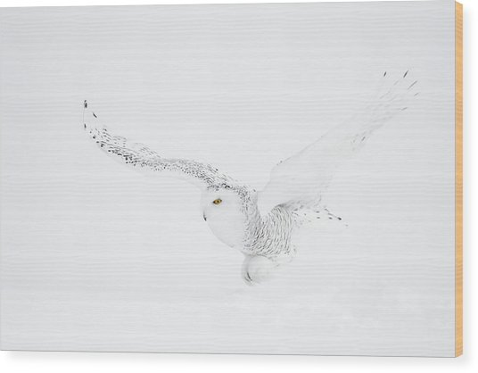 The White Ghost Is Coming Wood Print by Marco Pozzi