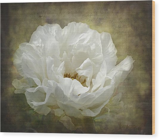 The White Peony Wood Print