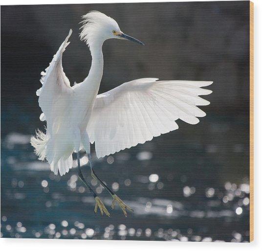 The White Winged Wonder Wood Print