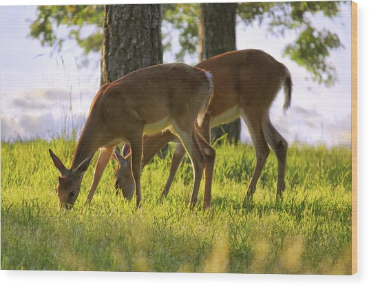 The Whitetail Deer Of Mt. Nebo - Arkansas Wood Print
