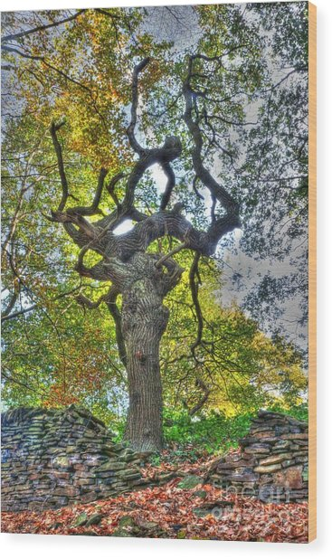 The Witches Tree Wood Print