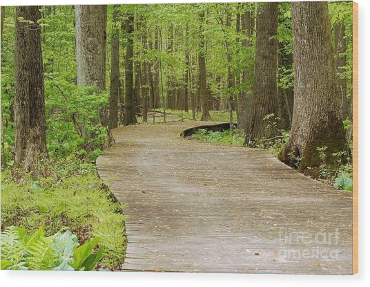 The Wooden Path Wood Print