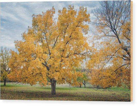 The Yellow Tree Wood Print